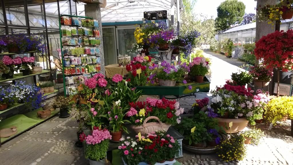 piante - Floricoltura Varanese