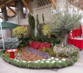 noleggio piante per eventi (2)
