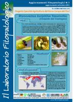 Laboratiorio fitopatologico N°1 – (Cinipide del castagno – Dryocosmus kuriphilus Yasumatsu)