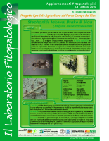 Laboratiorio fitopatologico N°3 – (Tingide delle Ericaceae – Stephanitis takeyai Drake & Maa)