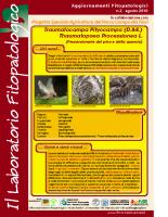 Laboratorio fitopatologico N°2 – (Processionarie del pino e della quercia – Traumatocampa Pityocampa (D.&S.) – Thaumatopoea Processionea L.)