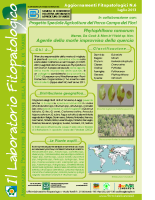 Phytophthora (2)